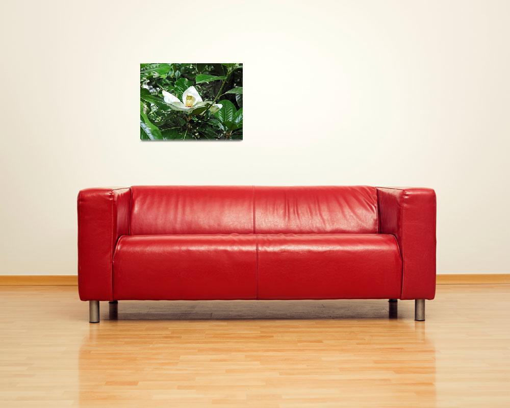 """Magnolia Flower 3""  (2009) by MichaelKarasik"