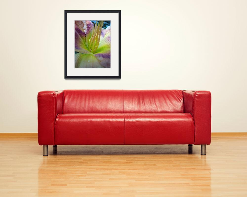 """lily after the rain&quot  (2008) by willis-prints"