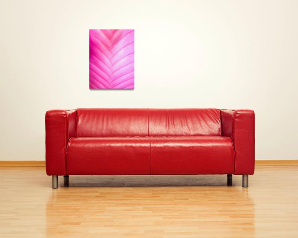 """""""Pink Quill Bromeliad Macro&quot  (2012) by joeyartist"""