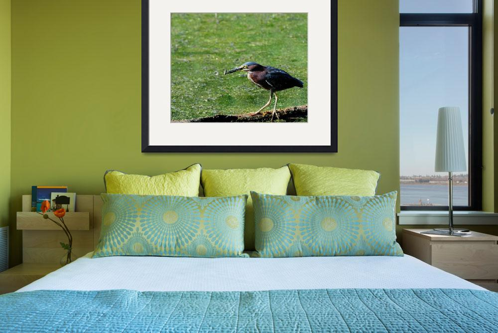 """""""Green Heron (Butorides virescens)&quot  by Anthemrdr"""