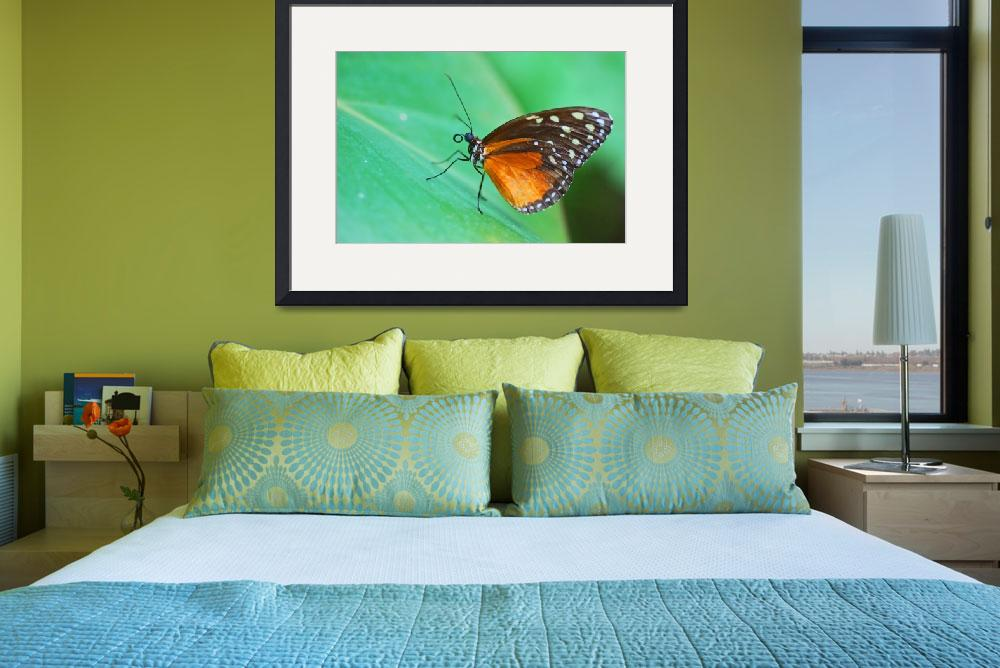 """""""Butterfly on Green Leaf""""  by ianthes1"""