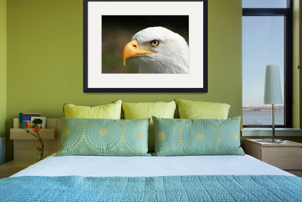 """Bald Eagle Watching&quot  (2014) by rhamm"