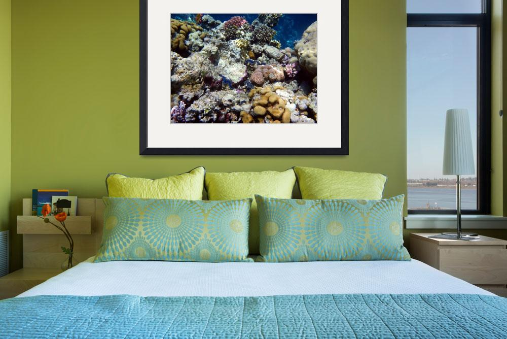 """""""clams and coral-sharm 09- tamaras group1 1070&quot  (2009) by phototes"""