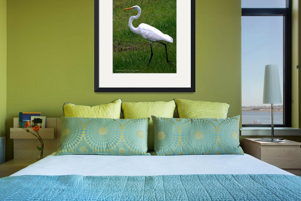"""""""""""Great Egret On the Move""""&quot  (2009) by ChrisCrowley"""
