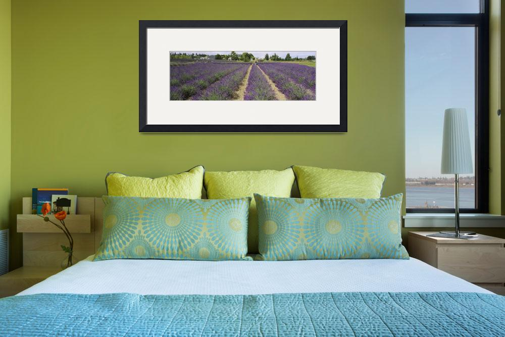 """Field of lavender&quot  by Panoramic_Images"