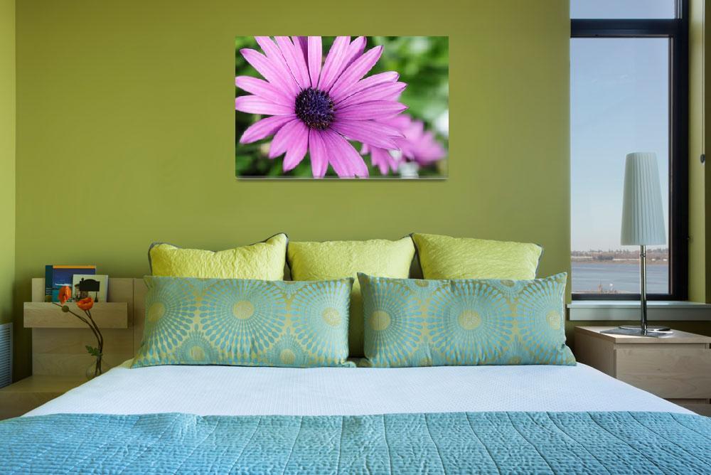 """""""Purple daisy""""  (2010) by pulen"""