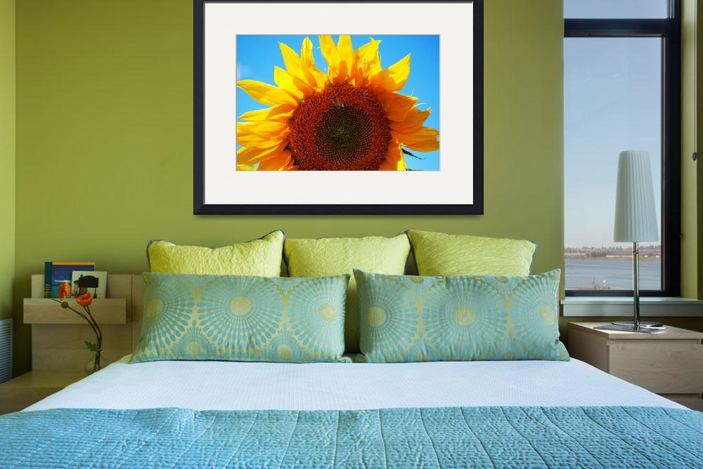 """Bee on sunflower&quot  (2009) by dmndm"