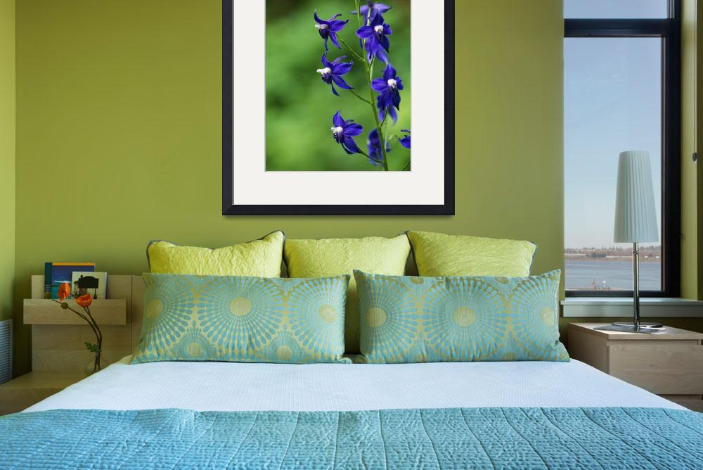 """Poison Delphinium Flowers In Bloom""  by Panoramic_Images"