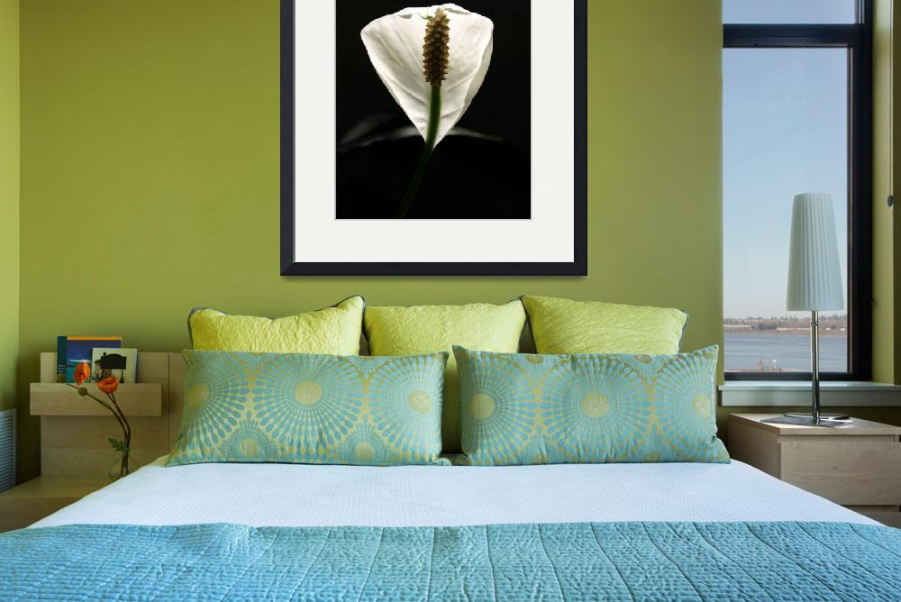 """""""PEACE LILY""""  (2008) by ImagesByMichaelMiotke"""