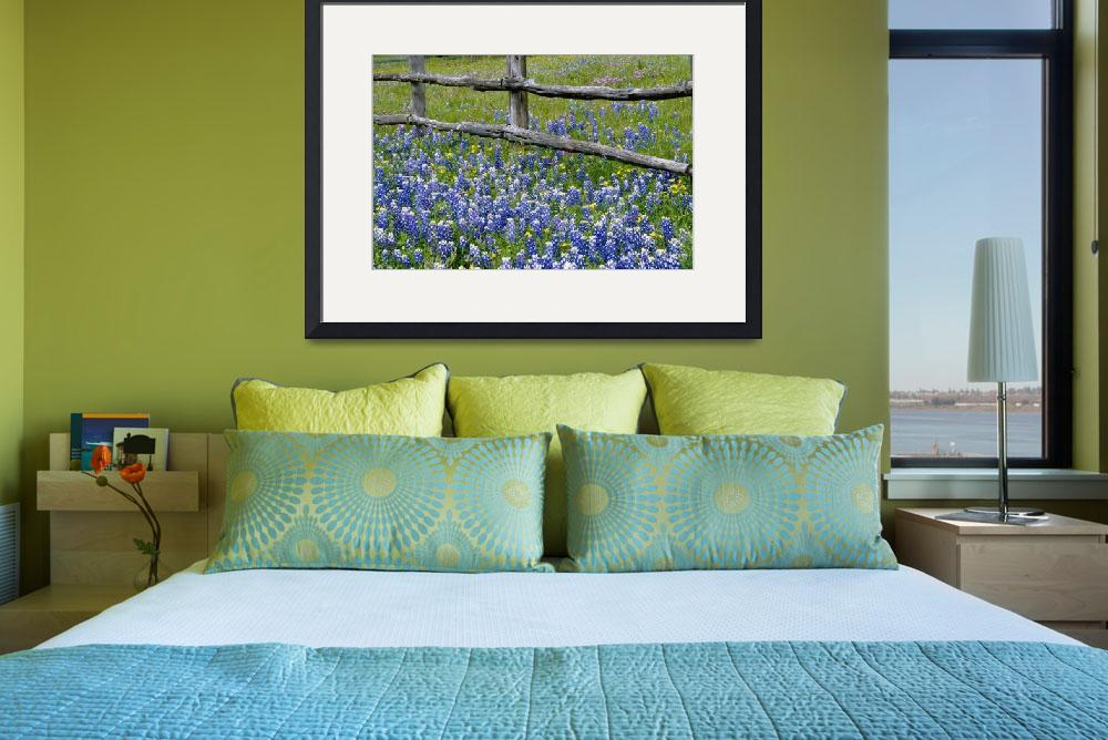 """""""Bluebonnet flowers blooming around weathered wood&quot  by Panoramic_Images"""