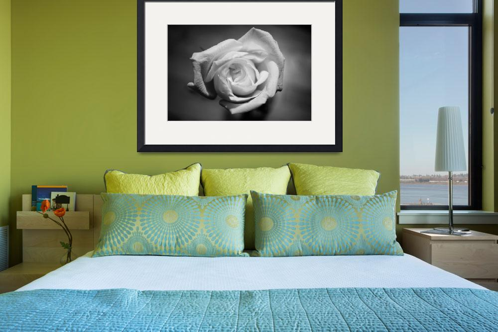 """""""White Rose&quot  (2010) by thewaltonsare"""