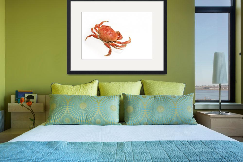 """""""crab""""  (2009) by pkripper503"""
