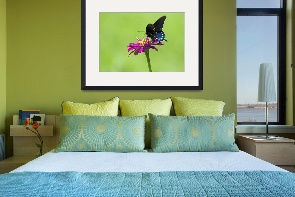 """""""Pipevine Swallowtail&quot  by tricia"""