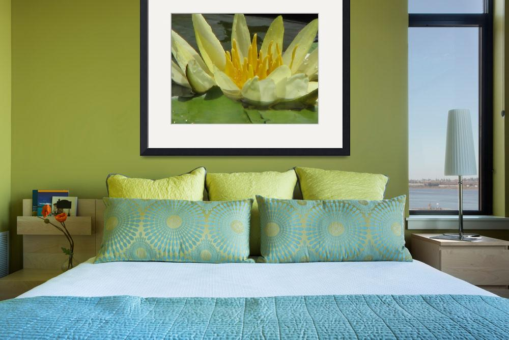 """""""Yellow Water Lily&quot  (2009) by srzimmartist"""