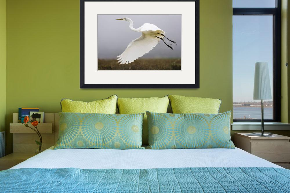 """""""Great Egret (Ardea alba), great-egret_MG_5189&quot  by mikebaird"""