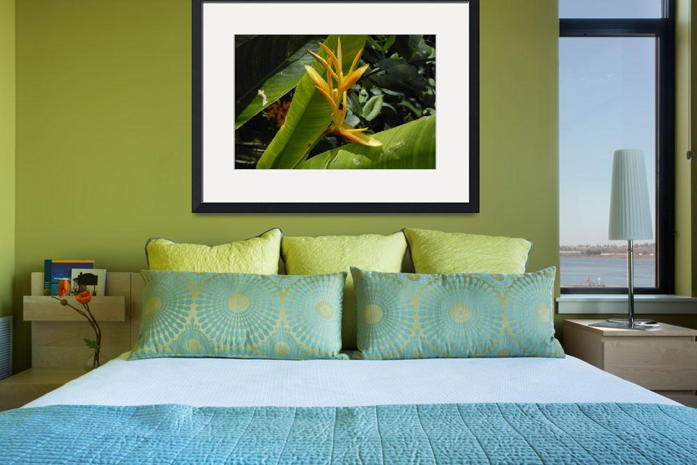 """Cayman Islands Exotic Plant Life&quot  by RonScott"