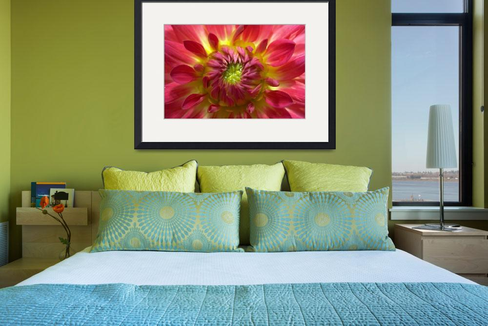 """Yellow and red dahlia&quot  (2008) by cisfo"