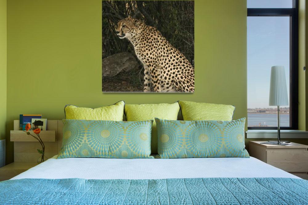 """""""Cheetah Watching""""  by KarenZukRosenblatt"""