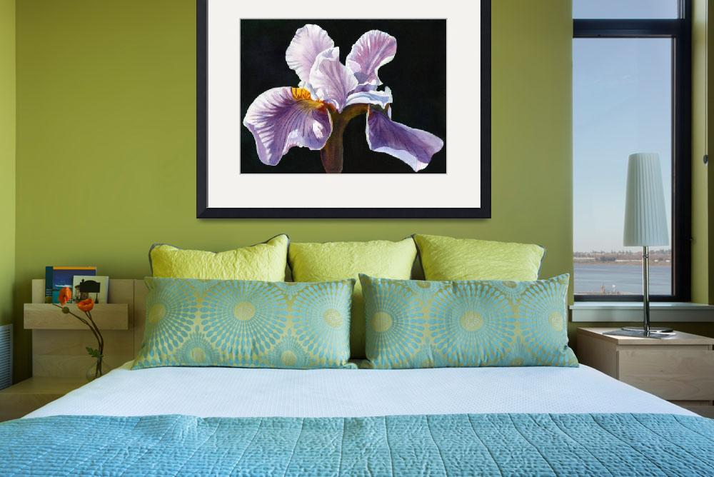 """Lavender Iris with Black Background""  (2012) by Pacific-NW-Watercolors"
