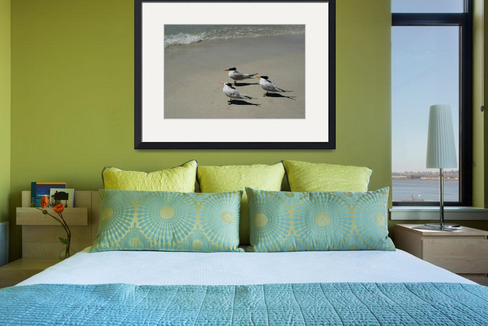 """""""Royal Terns Enjoy The Beach&quot  (1998) by DMHImages"""