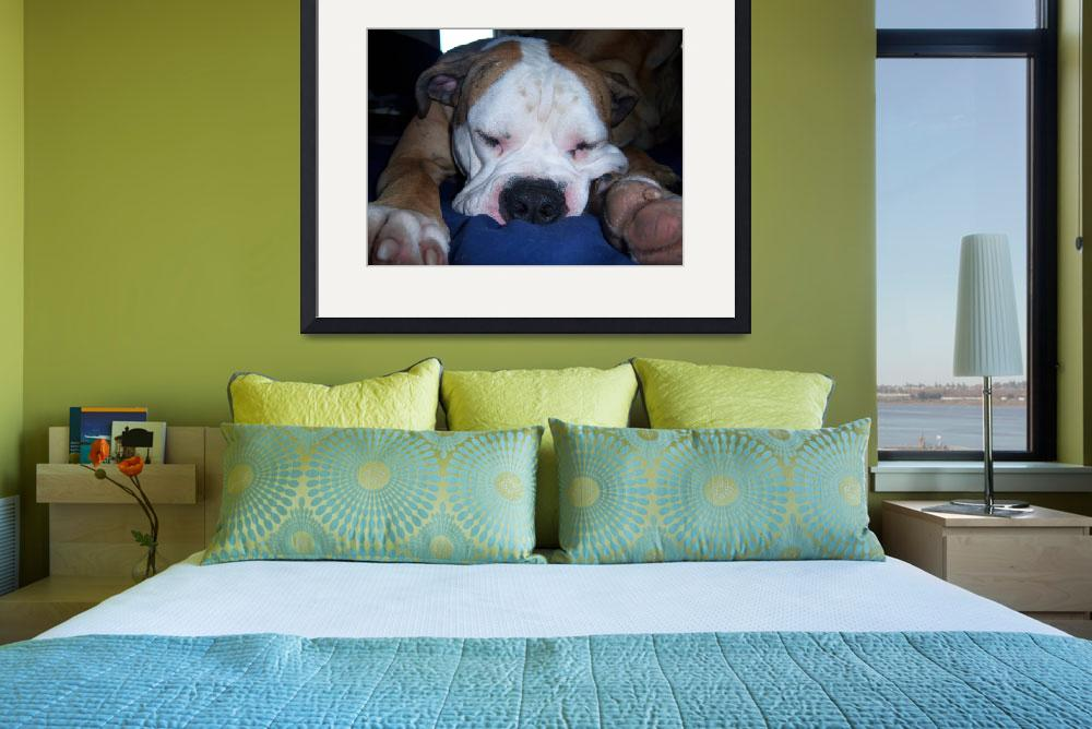 """""""Bulldog Trying To Sleep!!&quot  (2010) by newman407"""