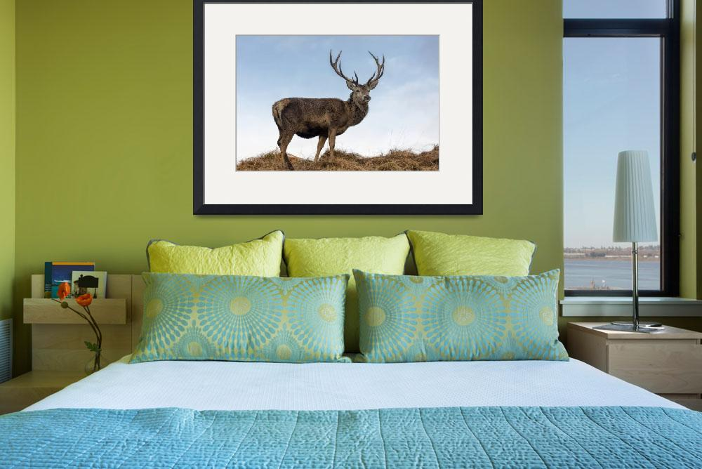 """""""Red Deer Stag on a Hilltop&quot  (2015) by derekbeattieimages"""