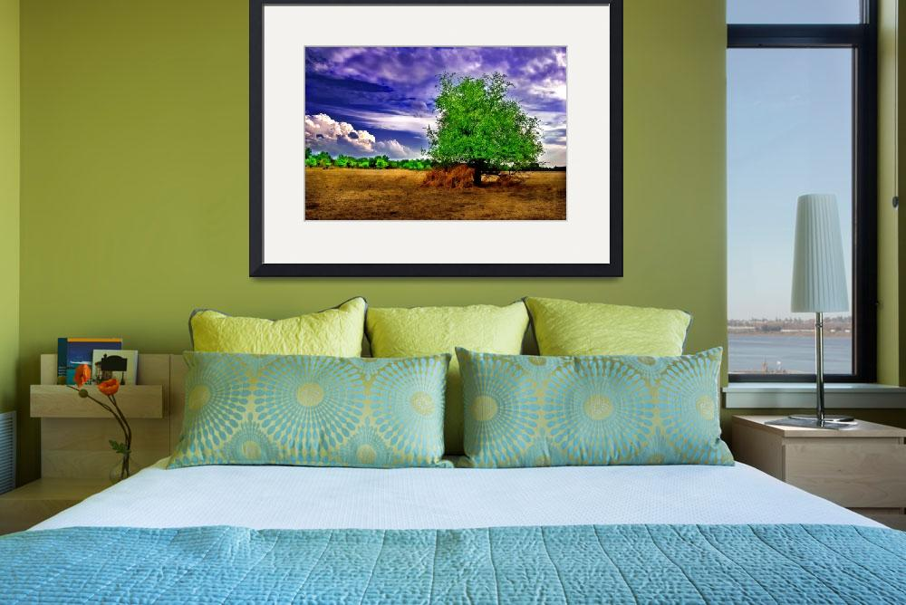 """""""DSC_5422- Solitary Tree""""  (2008) by photocell"""