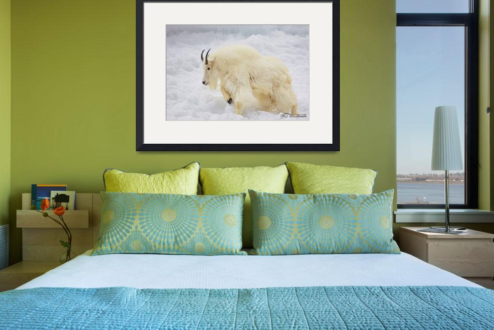 """""""The Majestic Mountain Goat&quot  by RHMiller"""