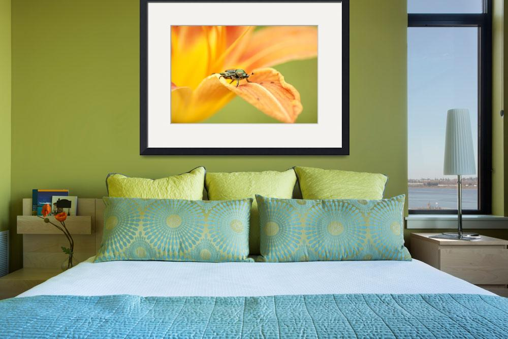 """Japanese Beetle On Lily&quot  (2010) by rmiller"