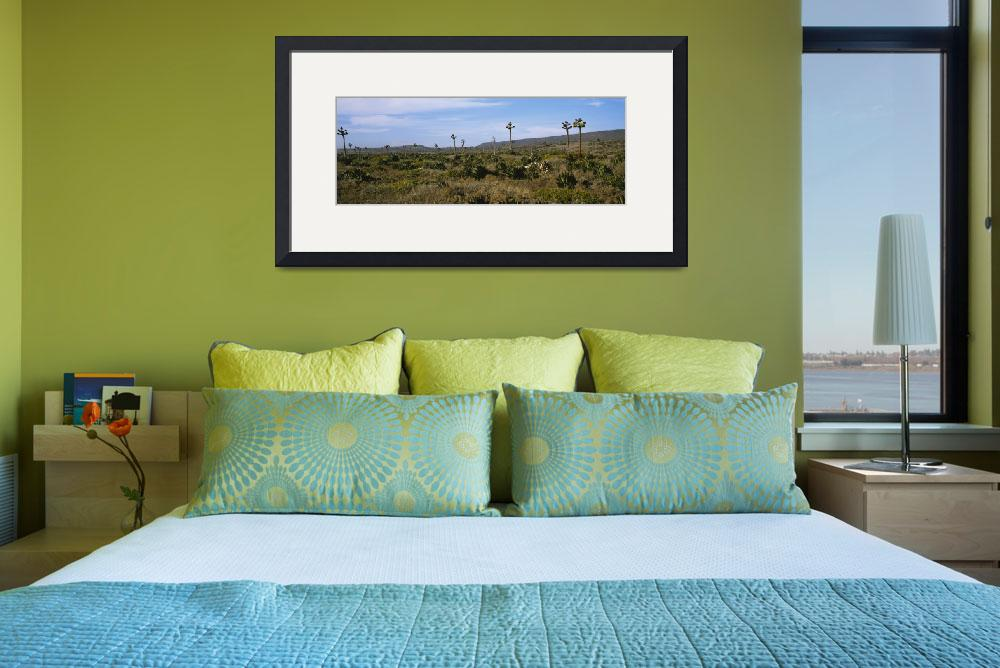 """""""""""Yucca plants on a landscape, Baja California, Mex&quot  by Panoramic_Images"""
