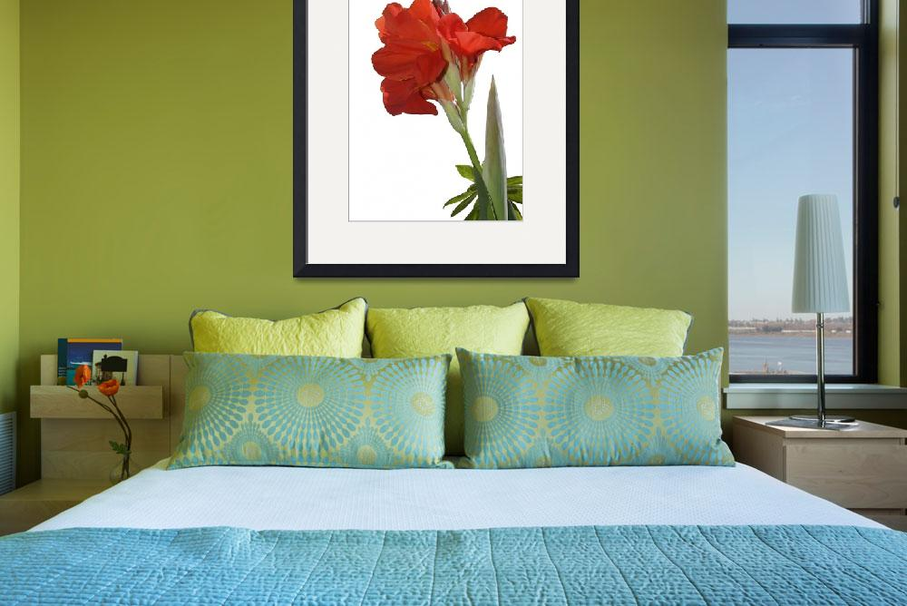 """Red Canna Lily  in bloom&quot  by eyalna"