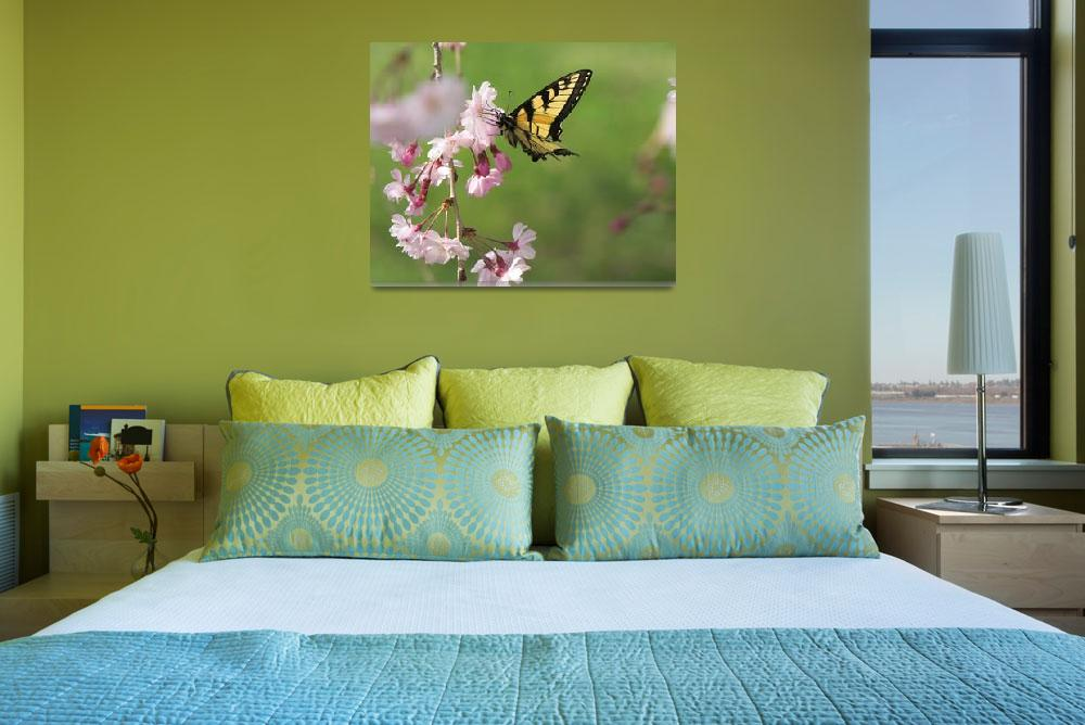 """""""Butterfly and Cherry Blossoms&quot  (2007) by tricia"""