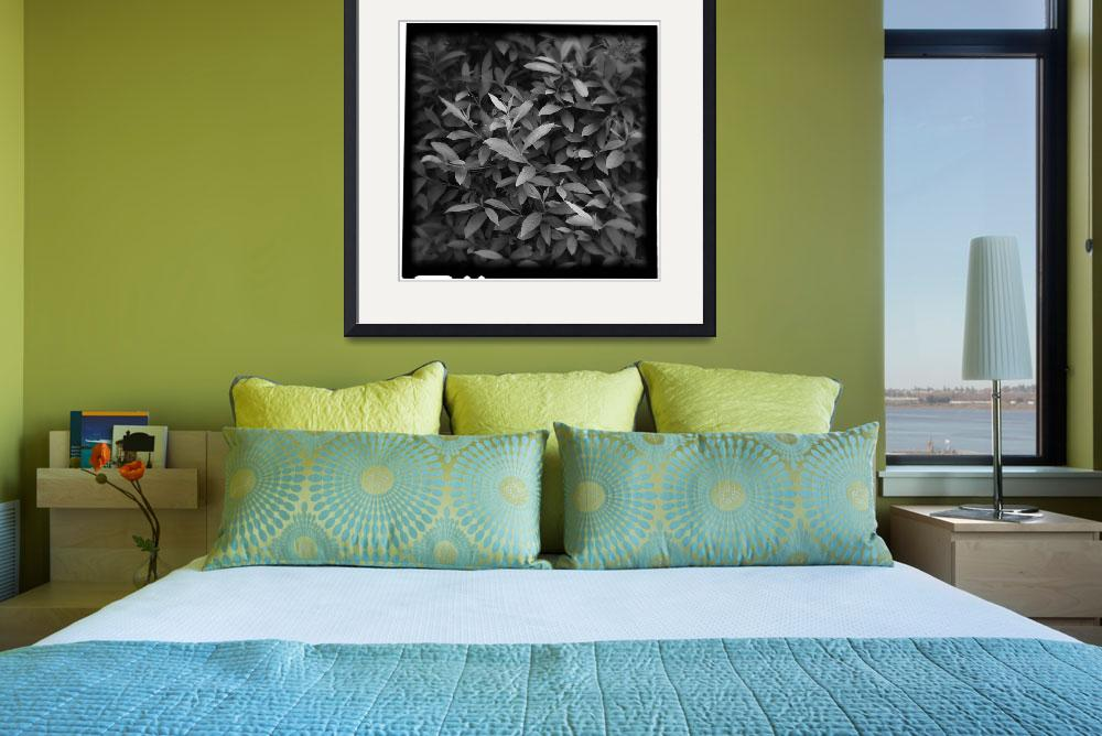 """""""Forsythia Leaves II&quot  (2008) by lensnation"""