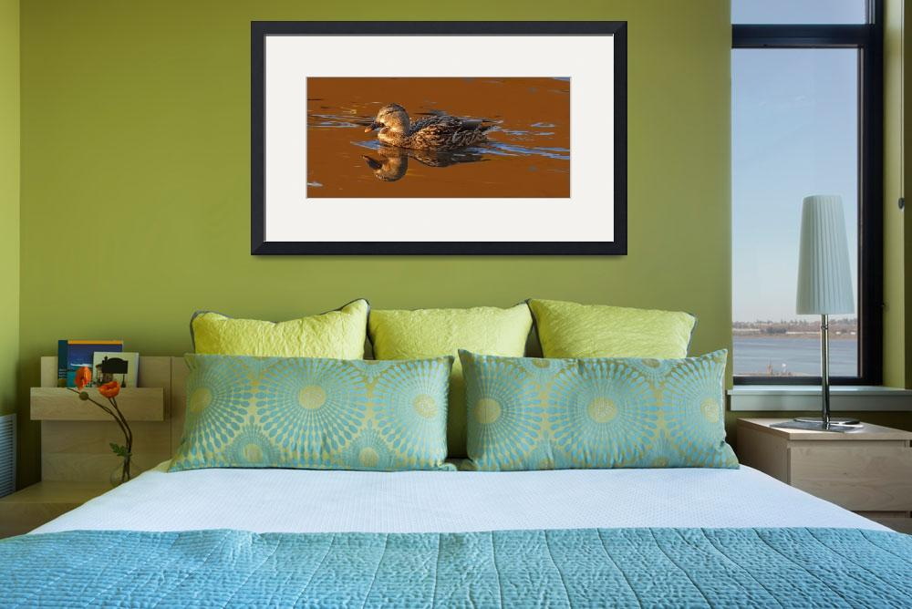 """Mallard Hen on Satin Waters on Pond in Pioneer Par&quot  (2008) by jfranklinwillis"