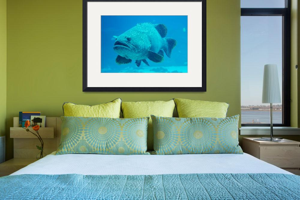 """giant grouper fish looking at diver&quot  by digidreamgrafix"