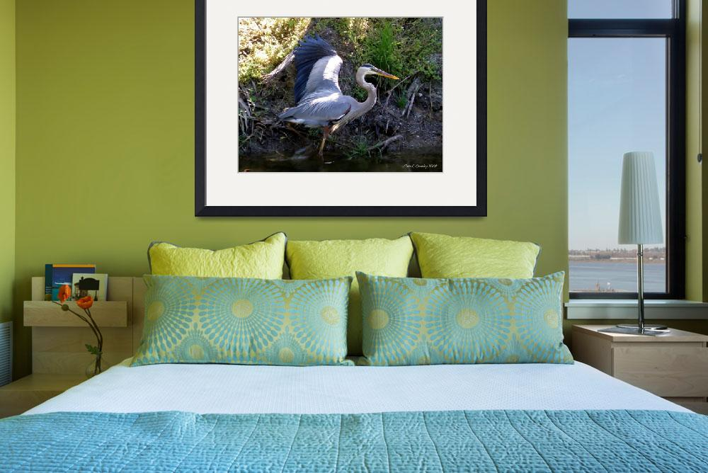 """Great Blue Heron&quot  (2009) by ChrisCrowley"