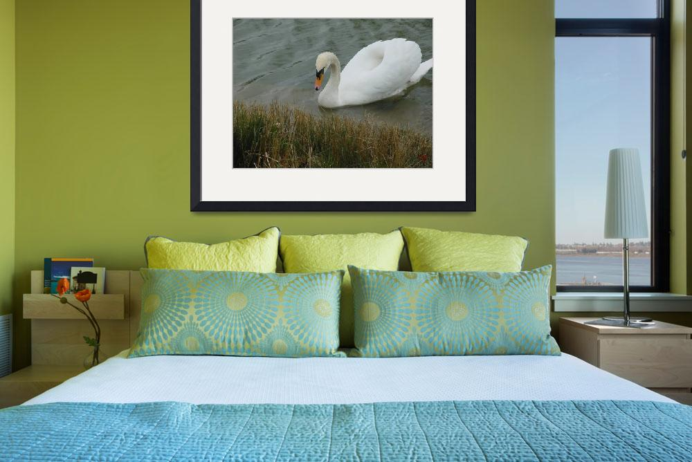 """""""Swan On Water&quot  by TheGreatPhotoGuy"""