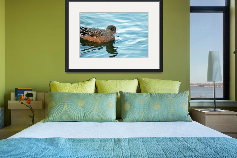 """""""American Wigeon&quot  (2010) by ADrauglis"""