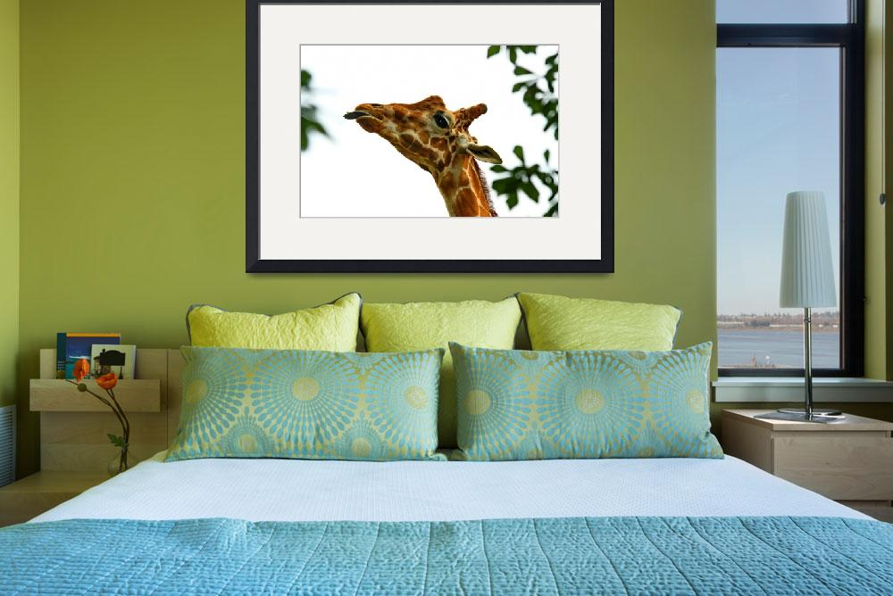 """""""Giraffe Sticking His Tongue Out""""  (2010) by expressionsbytricia"""