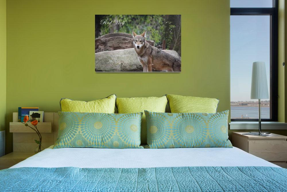 """""""Red Wolf 1 Poster&quot  (2012) by beautifulprints"""