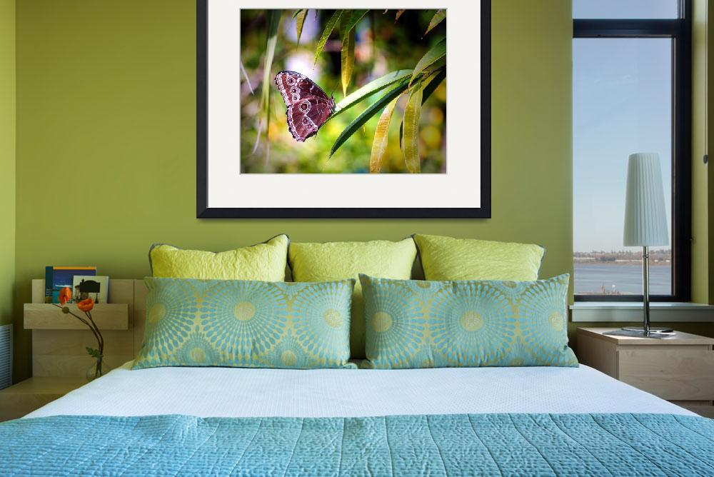 """""""Blue Morpho Butterfly in St. Thomas&quot  by travel"""