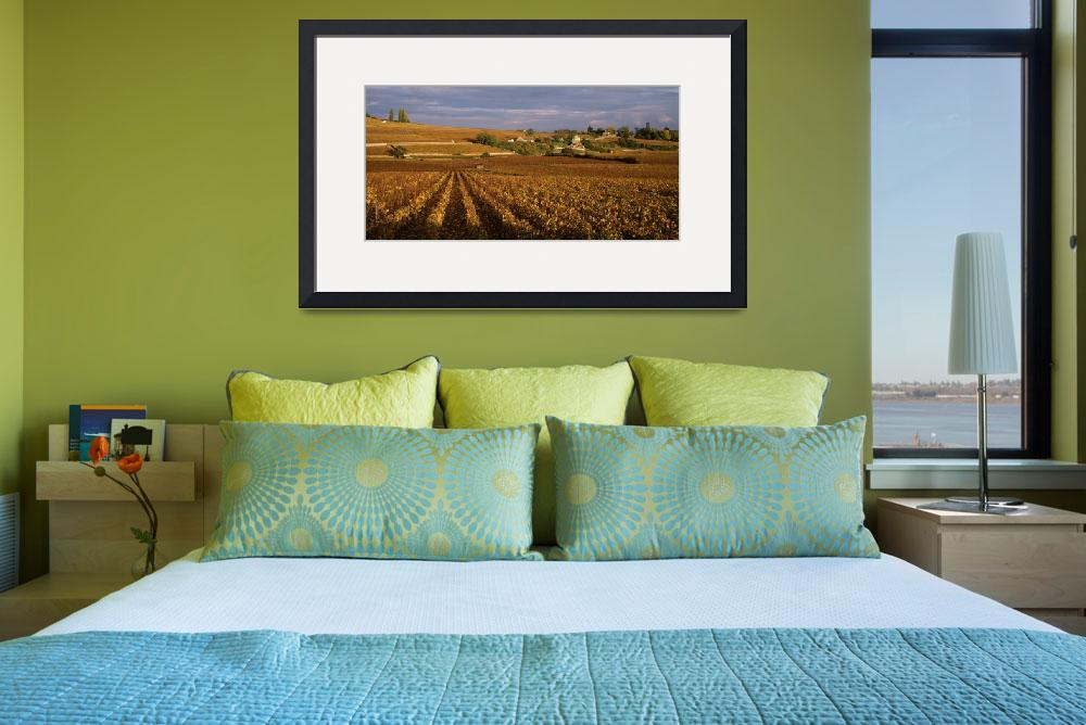 """""""Vineyards in Bourgogne France&quot  by Panoramic_Images"""