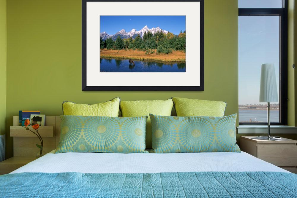 """Grand Tetons, Snake River, Cow Moose Feeding, Wyom""  by DesignPics"
