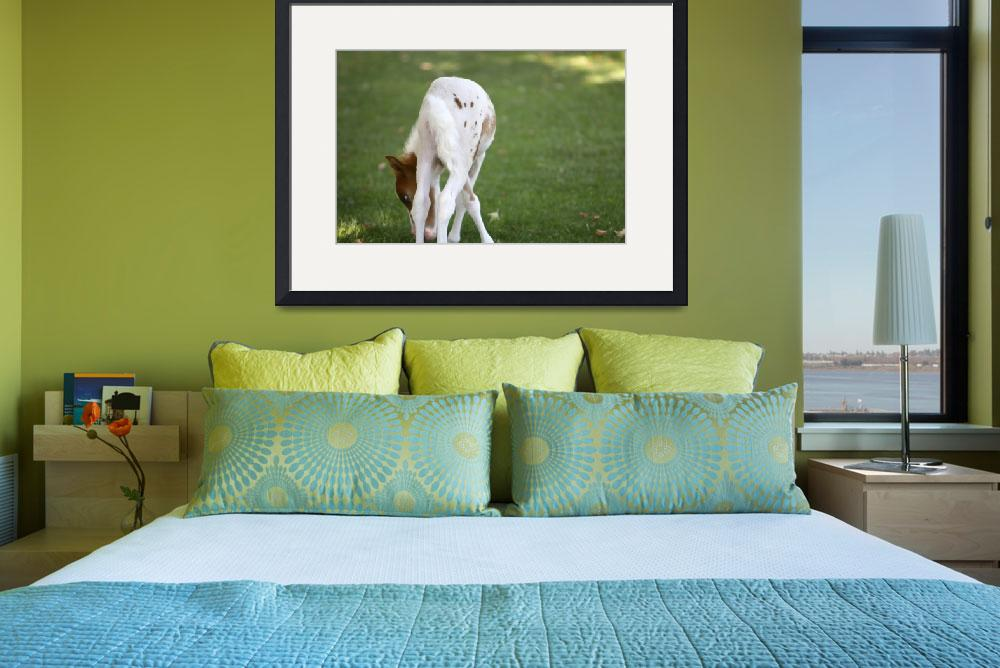 """""""Baby Miniature Horse_03&quot  (2010) by SBCountyImages"""