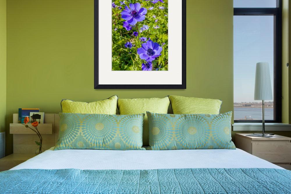 """Beautiful anemones&quot  (2012) by SueLeonard"
