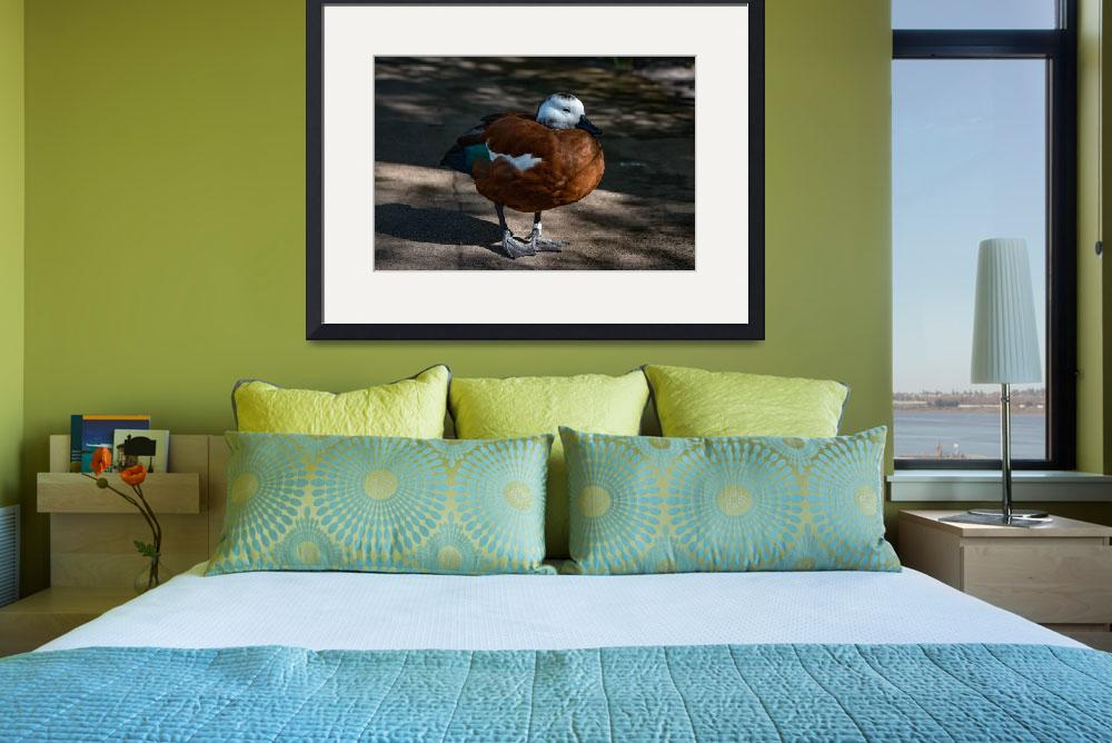 """Brazilian Teal (Lesser)&quot  (2016) by spindrifter"