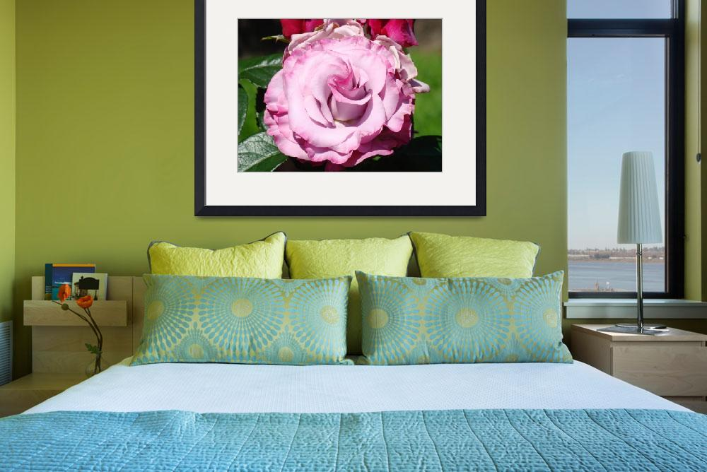 """Rose Spiral Art Prints Big Lavender Pink Purple Ro&quot  (2013) by BasleeTroutman"