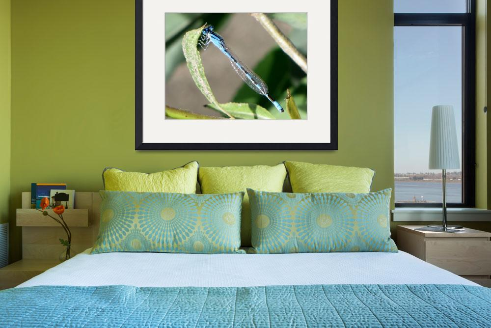 """""""Blue and Black Dragonfly&quot  (2010) by Terriair"""