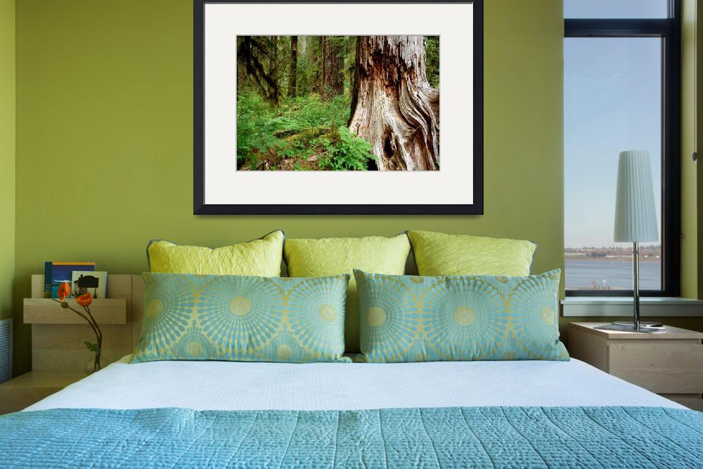 """""""Hoh Rain Forest&quot  by deanlivingston"""