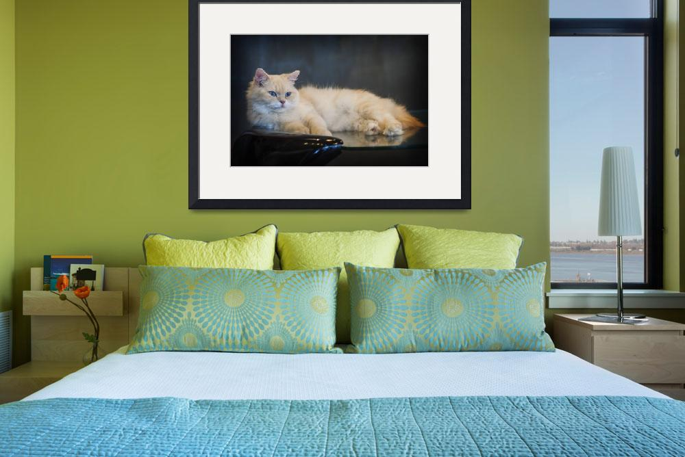 """""""cat lounge""""  (2014) by philwphotography"""